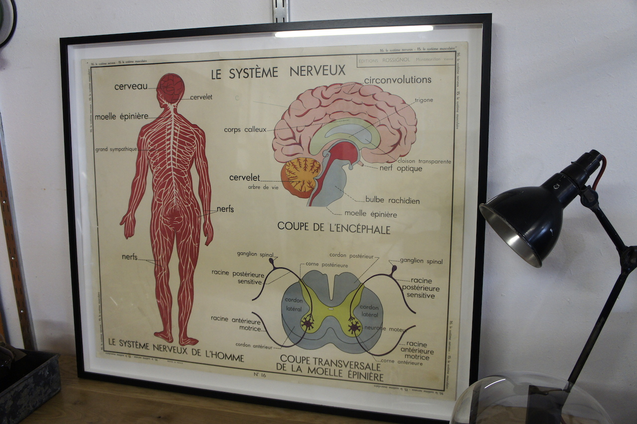 Art, Prints and Maps : Framed Anatomical Educational Poster ...